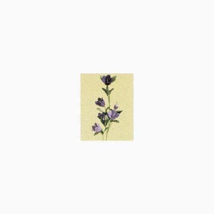 fiori con stelo all uncinetto stelo per fiori uncinetto canula da stafil accessori