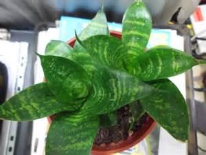 Garden Snake Care Garden Design 66592 Garden Inspiration Ideas