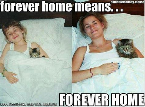 all my kitties furever home means forever home