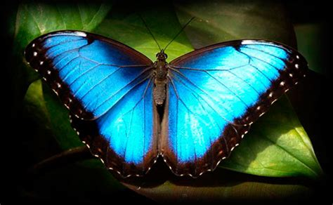 imagenes de mariposas reales image gallery imagenes de mariposas coloridas