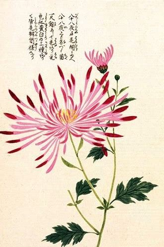 gambar bunga cantik terlengkap  gambar pedia