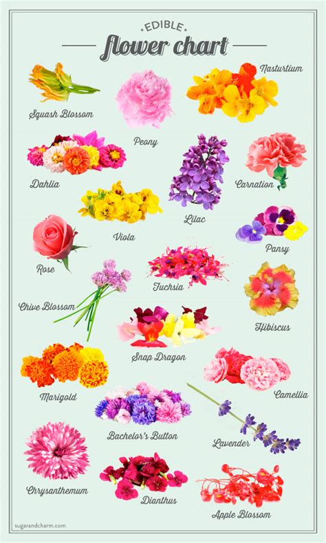 sugar and charm s edible flower chart sugar and charm sweet recipes entertaining tips