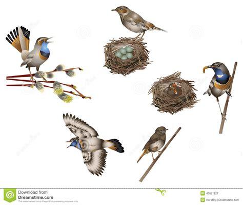life of bird stock illustration image 43621827