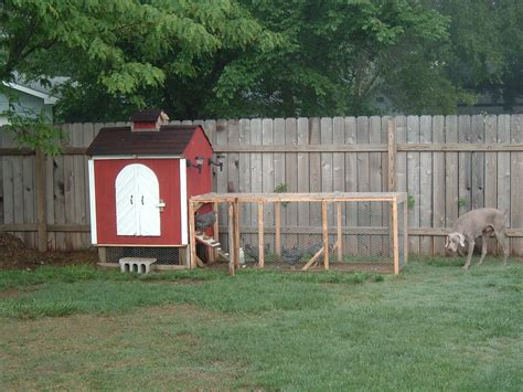 backyard chicken coop 6