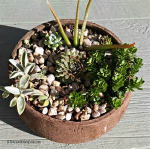 rustic succulent planters these plants can really take