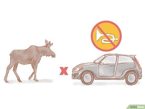 Rusa Atau Kijang cara menghindari tabrakan dengan rusa atau kijang wikihow