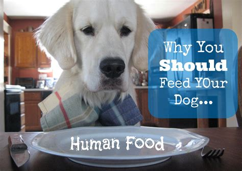 what human food can dogs eat bunkblog part 2 why you should feed your dog human food