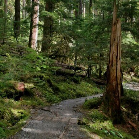 olympic national forest (olympic national park) 2018 all