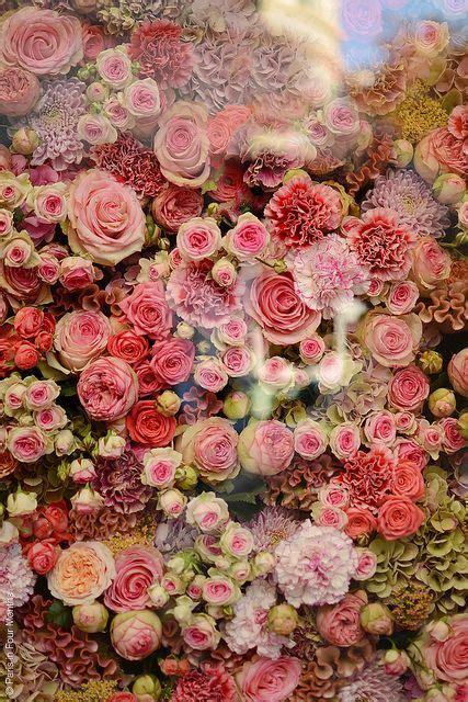 themes beautiful rose 12 best peach rose theme images on pinterest beautiful