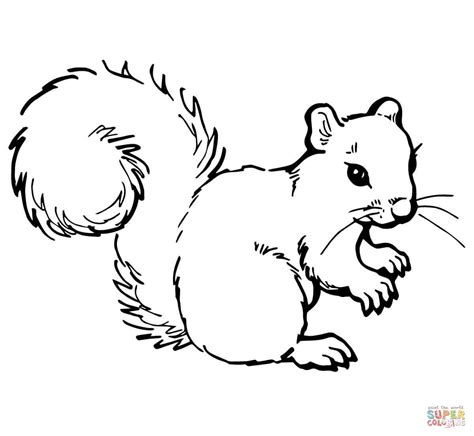 coloring page of a gray squirrel grey squirrel coloring online super coloring
