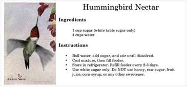 hummingbirds no red dye