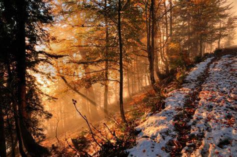 wallpaper autumn snow forest hill sunlight fog
