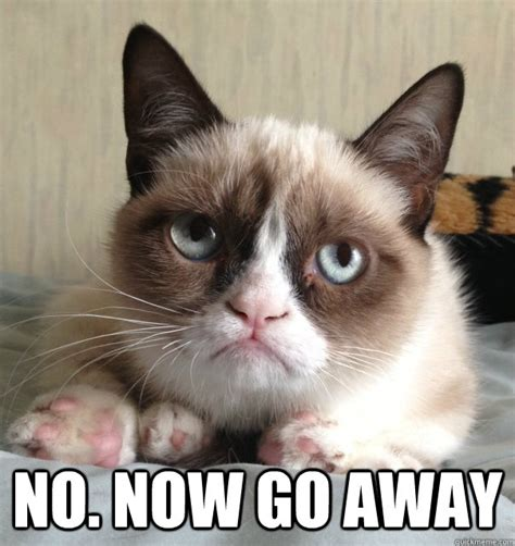 Grumpy Cat Yes Meme - no now go away misc quickmeme