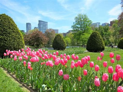 Boston Garden Hours by View Of Boston Skyline From The Tulip Bed Picture Of