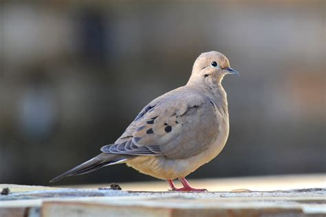 dove grey related keywords dove grey long tail keywords dove related keywords dove long tail keywords keywordsking