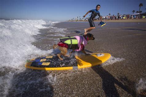 surfing competition surf doggie surf