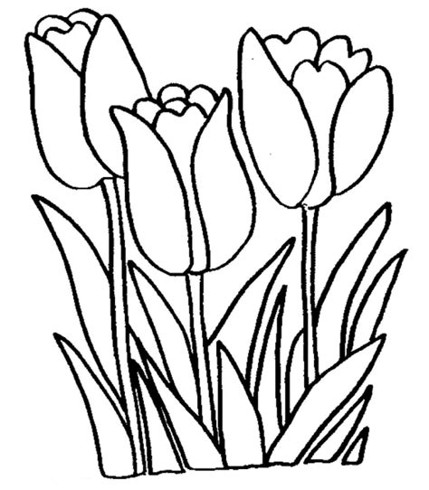 Free Printable Tulip Coloring Pages For Kids Pictures For To Color