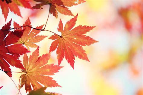 bringing warmth and cheerfulness to november oxfordwords