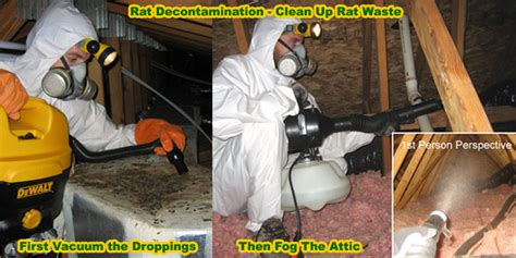 best poison for mice in attic how to get rid of rats in house building attic without