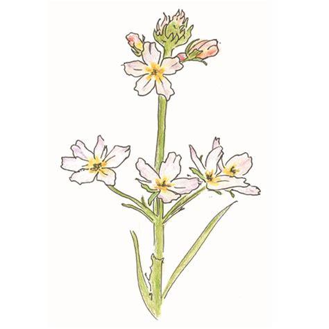 fiori di bach dove si comprano giardini
