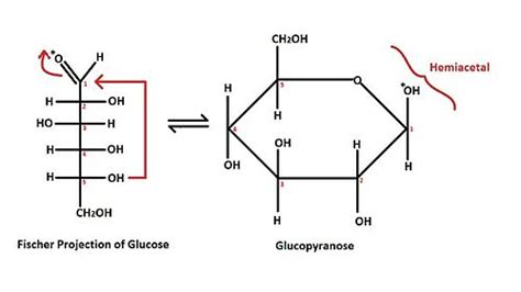 d aldoses carbohydrates structural biochemistry carbohydrates aldoses wikibooks