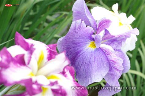 Daftar Sho Natur shobu in the koiwa garden mustlovejapan
