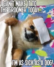 Pet Meme - 60 best cute pet memes and quotes images on pinterest