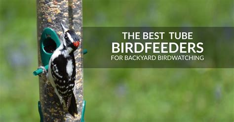 Backyard Bird Watcher by Best Feeders For Backyard Birdwatching Review Of Feeders