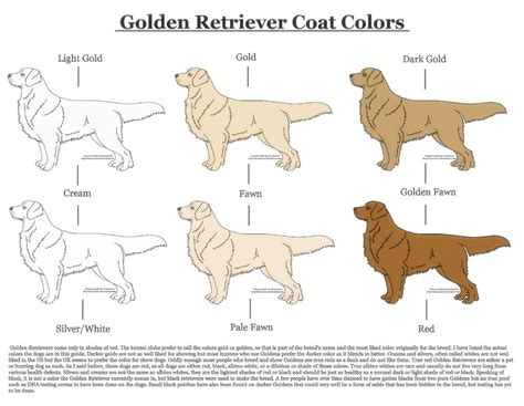 coat golden retriever golden retriever coat colors by xlunastarx on deviantart