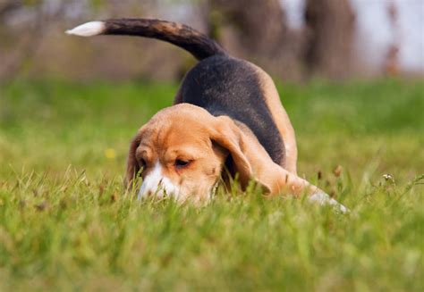 why do dogs eat other dogs why do dogs eat mud faqs dogs guide omlet uk