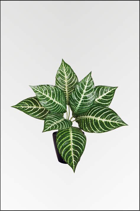 Große Zimmerpflanzen Kaufen 31 by Wir Bieten Ihnen Eine Gro 223 E Auswahl An K 252 Nstlichen