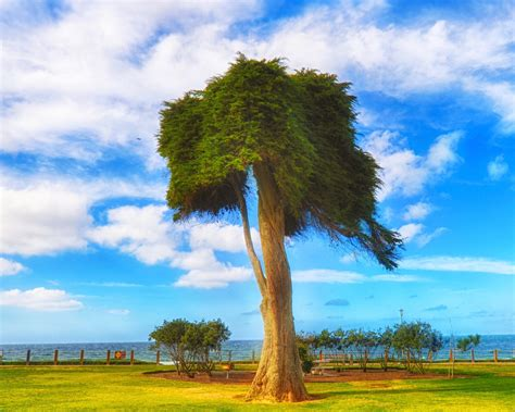dr seuss tree frankie foto 187 15 best spots to photograph san diego