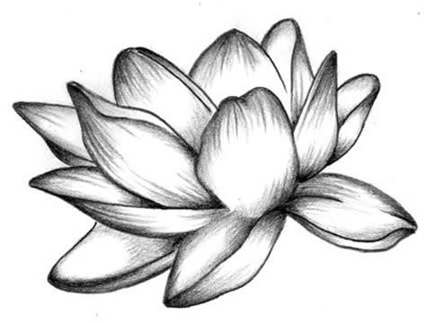 fior di loto disegno fiore di loto disegno fare di una mosca