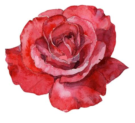 image red rose watercolor.png | animal jam clans wiki