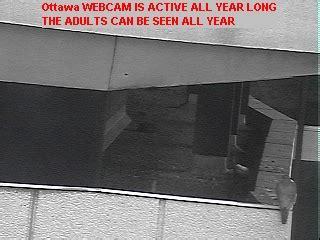 other live ottawa webcams