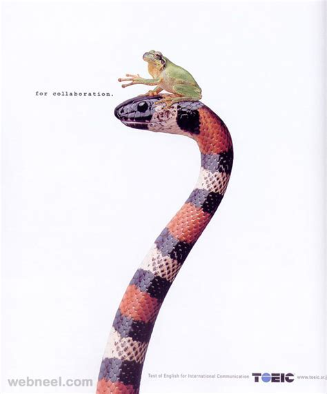 daily commercials the best commercials 30 best animal advertising designs and creative ads around