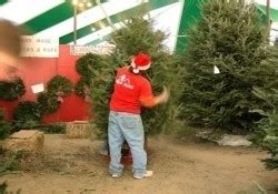 are papa noel trees good papa noel s trees blanco san antonio tx kid friendl trekaroo