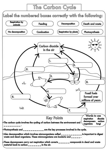 carbon cycle diagram worksheet gcse carbon cycle worksheets and a3 wall posters by