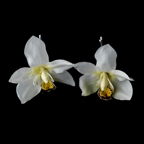 white orchid clip flower hair pin flower hair orchid floral hair clip pin bridal hair accessories
