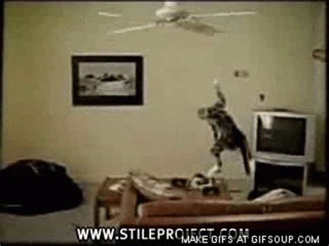 how not to use ceiling fans with images 183 wbab 183 storify