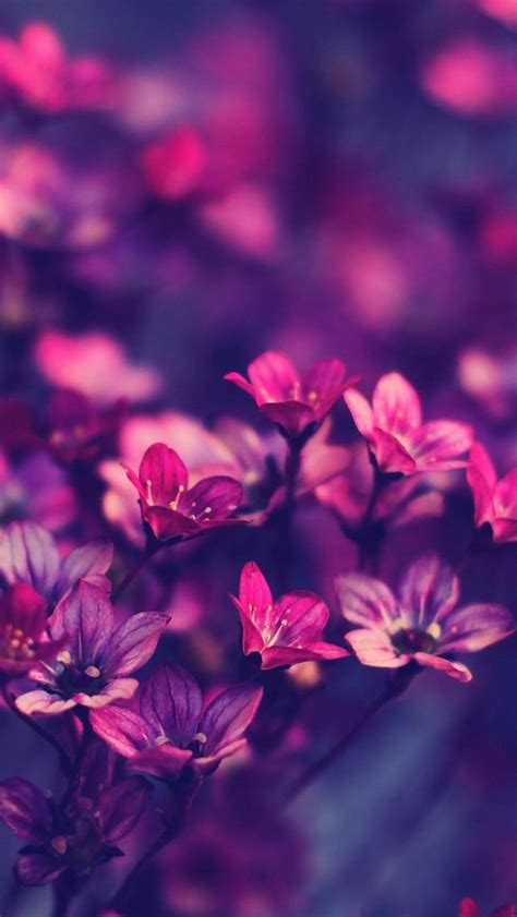 Flower Iphone 3d 1 purple flowers hd ios7 wallpaper for iphone and ipod touch pretty hd wallpapers for iphone