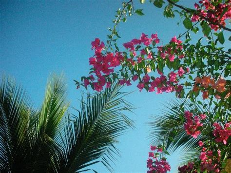 palm trees  flowers picture  comfort inn los cabos