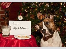 Holiday Food Dos and Don'ts for Pets | DoItYourself.com Facebook Home Page Sign Out