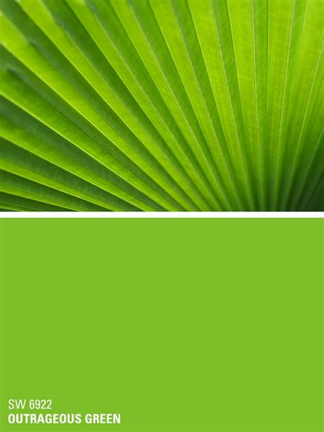 sherwin williams paint color outrageous green sw 6922