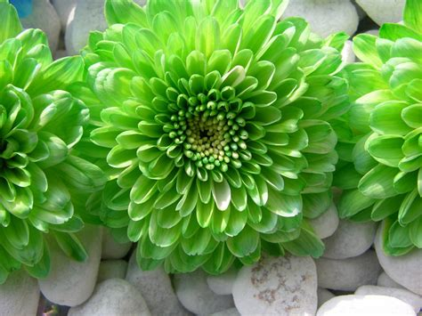 wallpaper green flower green flower wallpaper wallpapersafari