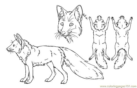realistic fox coloring page red fox coloring pages realistic coloring pages