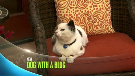 sneak a peek puppies quot cat with a quot sneak peek with a