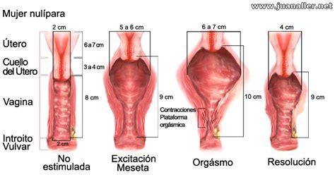penes gruesos dentro de las vajinas la penetraci 243 n est 225 sobrevalorada el problema de la