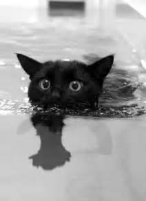 kitten swimming in bathtub cat animals black and white gato black cat