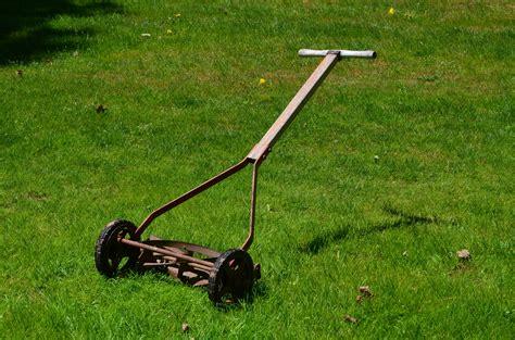 summer lawn care tips the girls outside page 18 doberman forum doberman